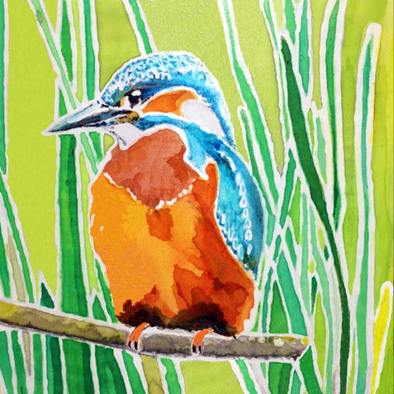 A card of a Kingfisher