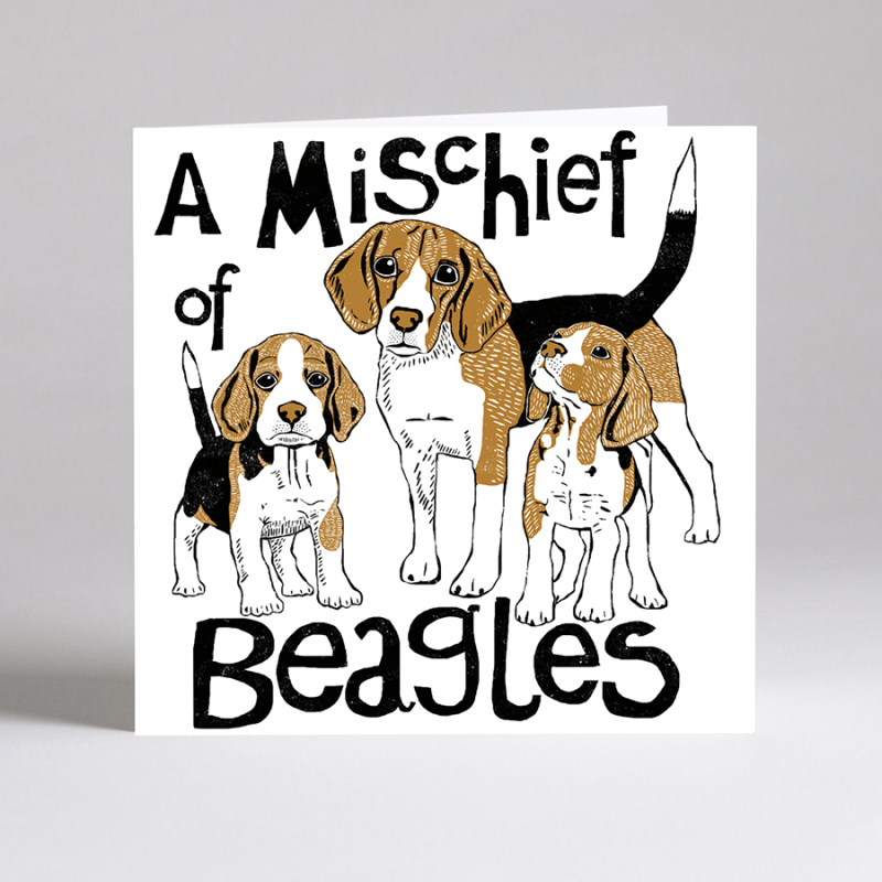New collective noun dog cards added to this ever popular range. Properly eco friendly too....